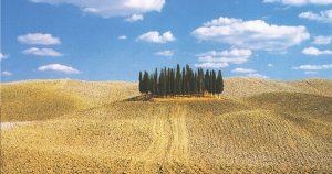 Cipressi Toscana